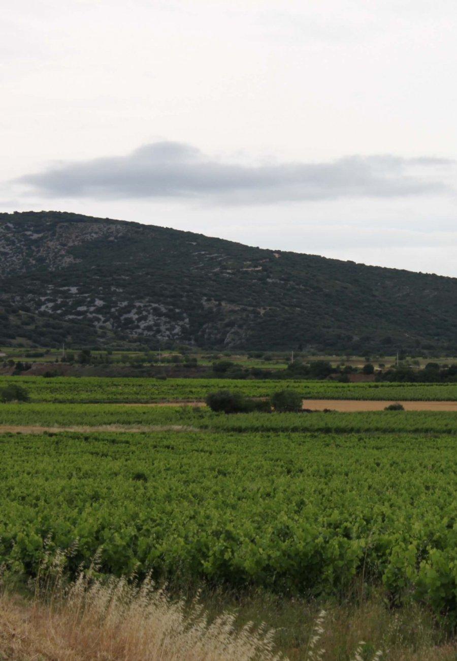 Domaine Saint-Philippe-1548