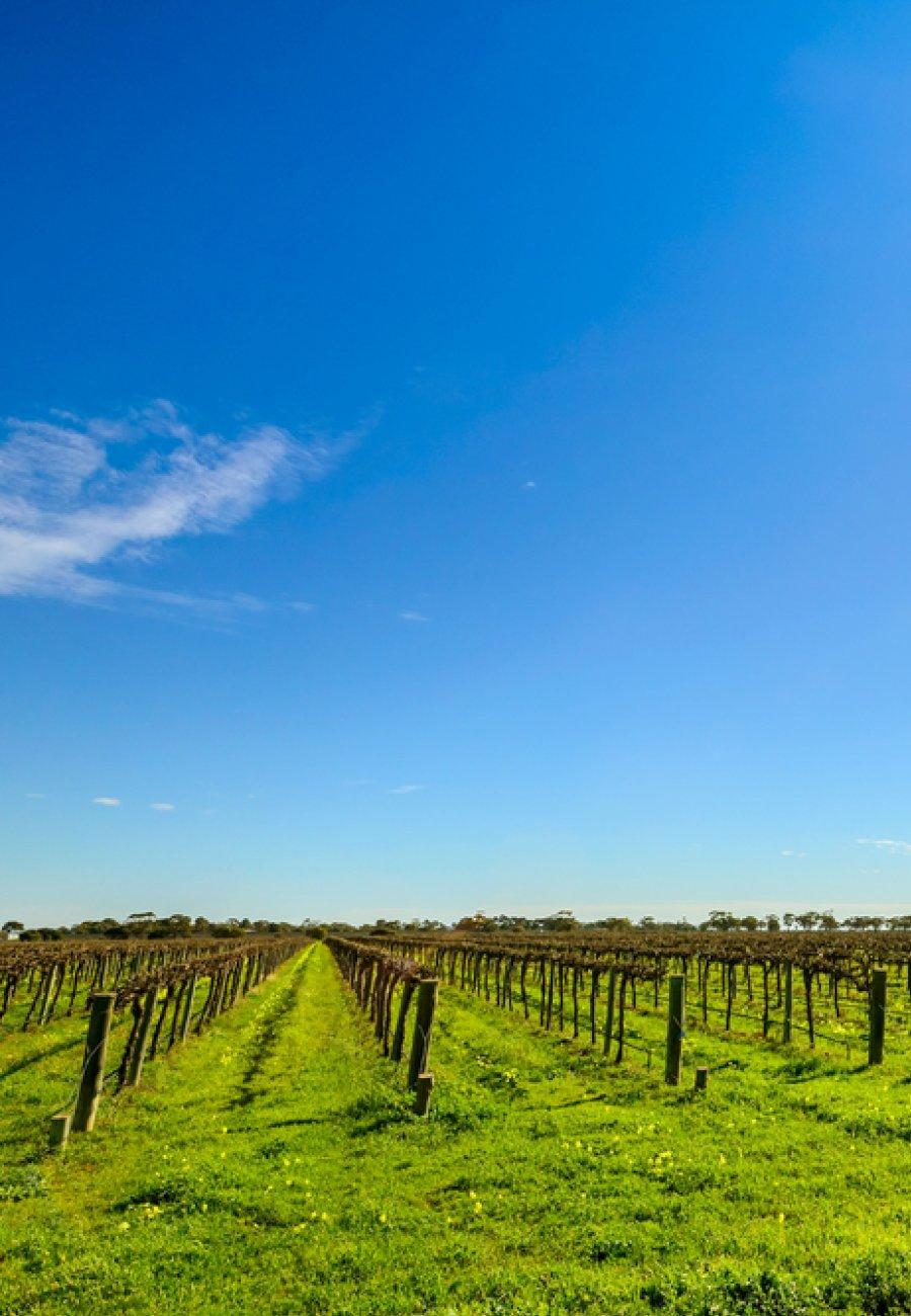 South Australia-1604