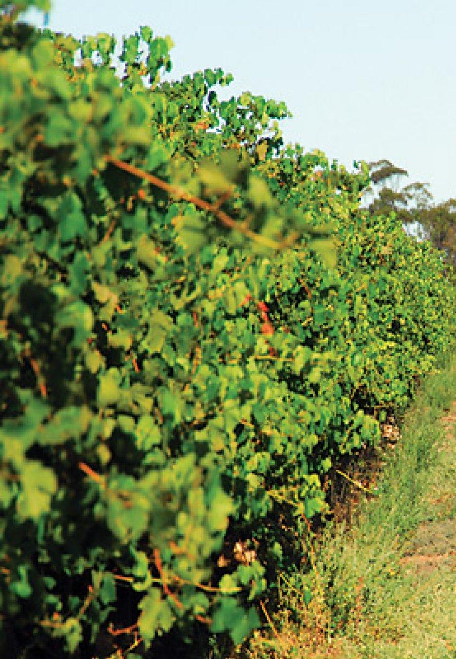 South East Australia-1606