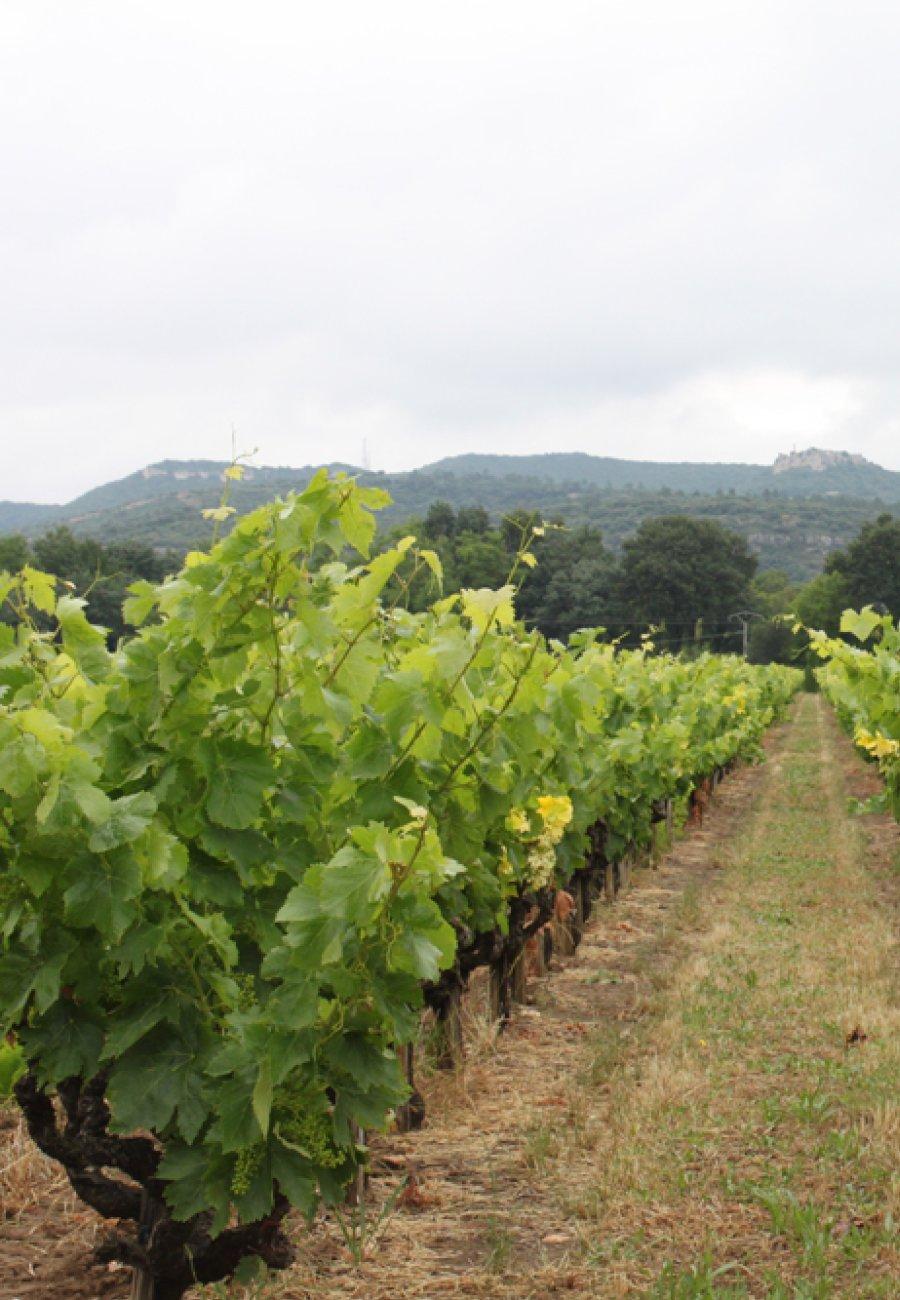 Vignerons Laudun Chusclan-176