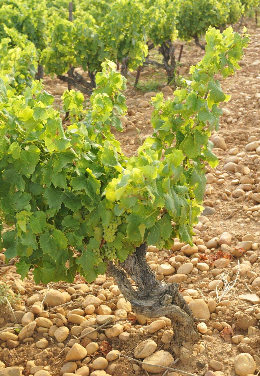 Vignerons Laudun Chusclan-177