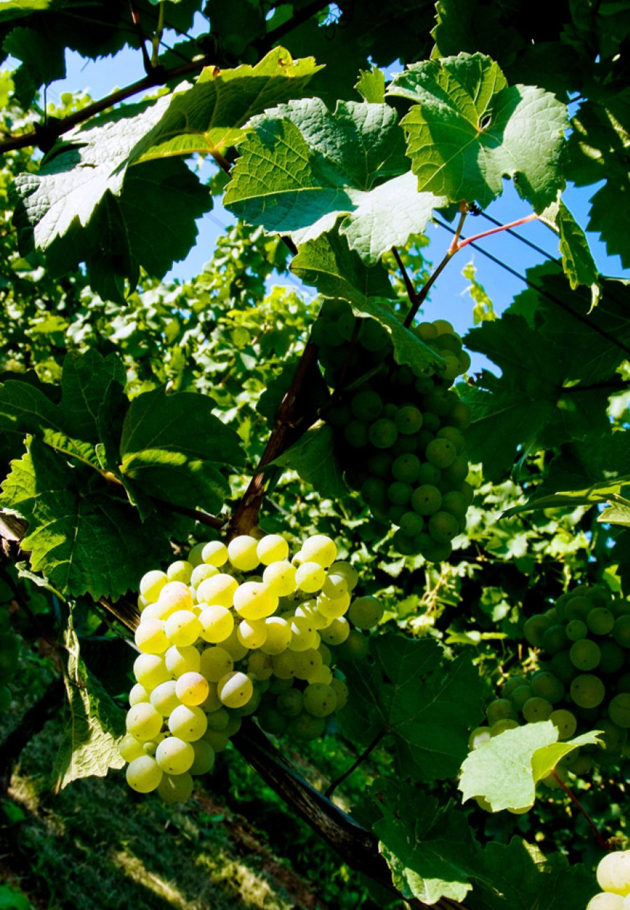Weingut Pfeffingen-205