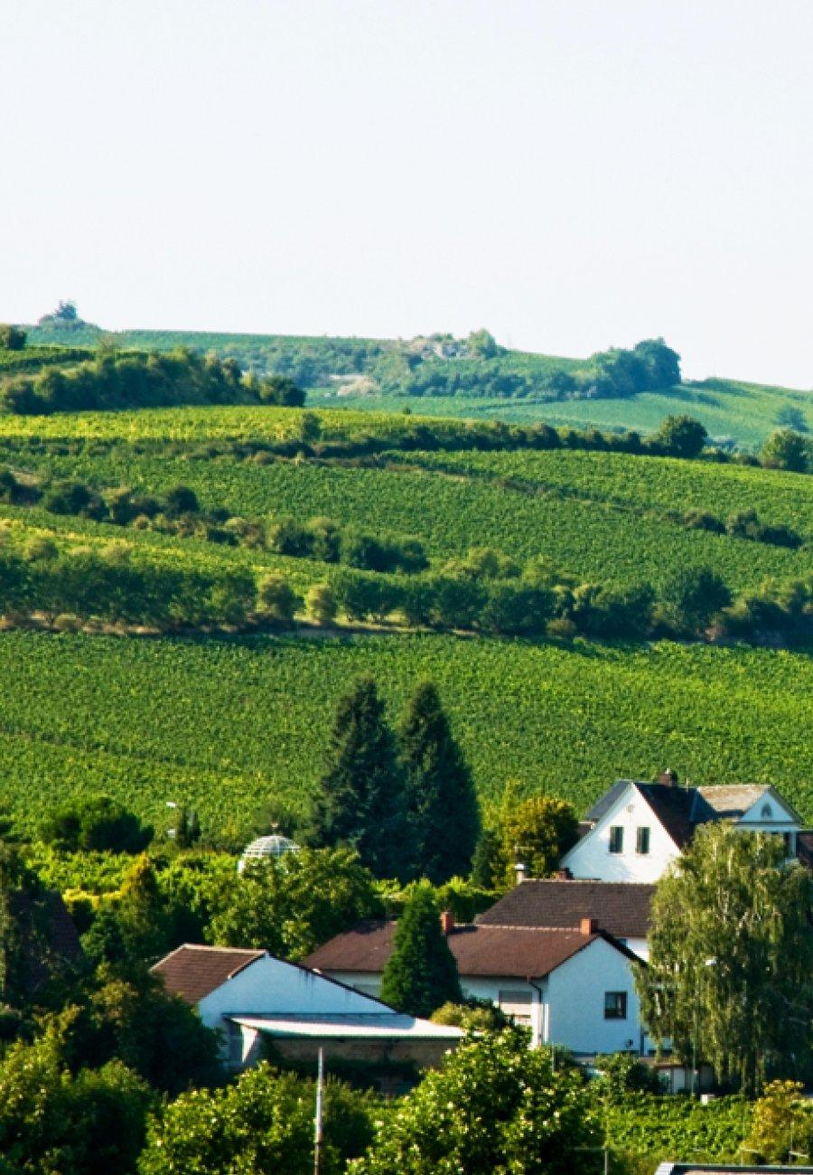 Weingut Pfeffingen-210