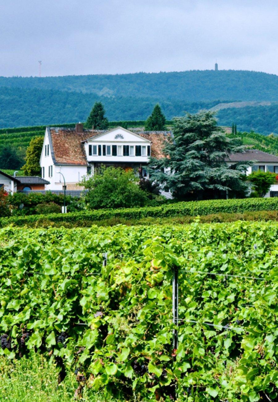 Weingut Pfeffingen-211