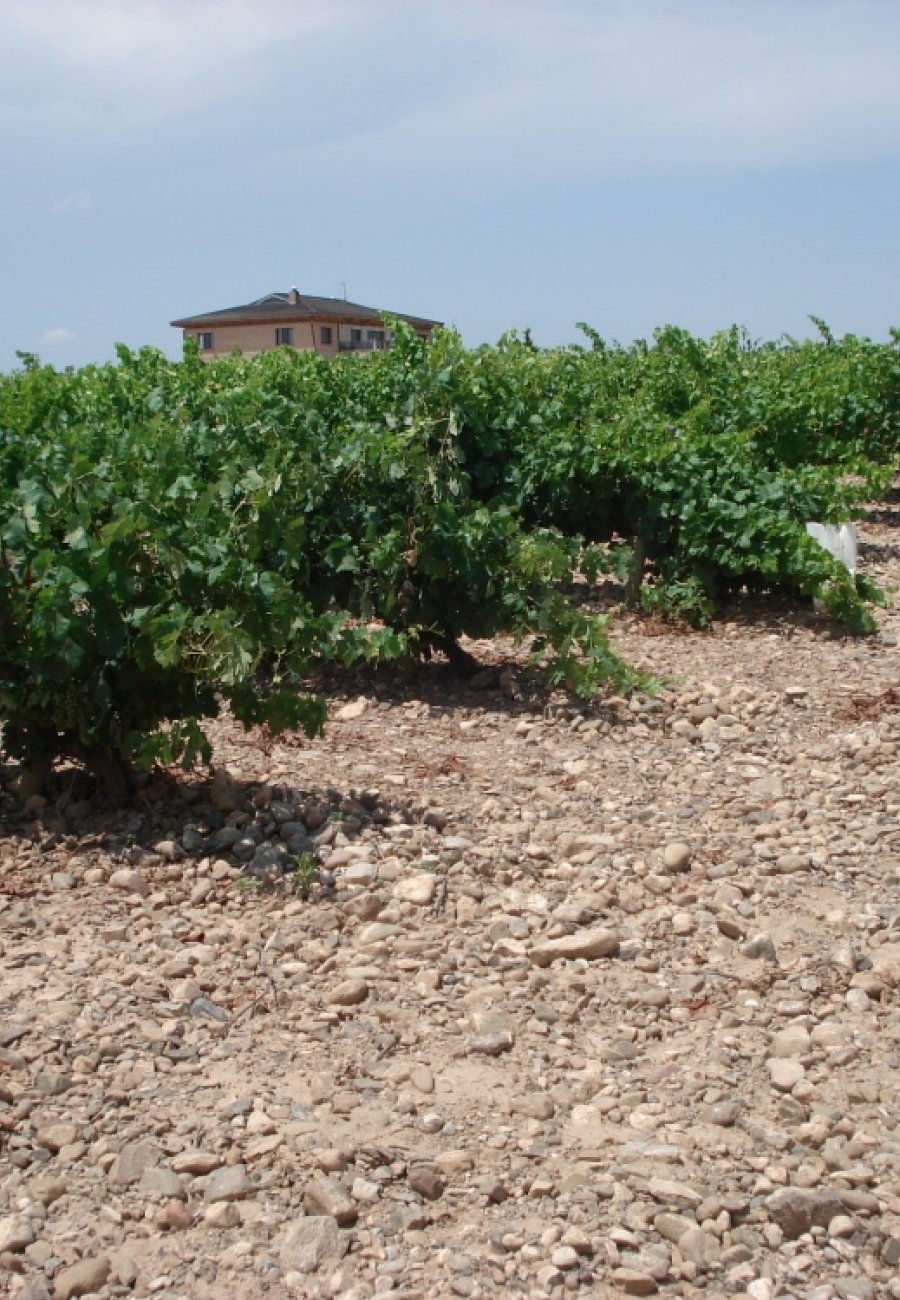 Rioja-48